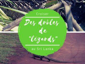 Drôles de lézards du Sri Lanka