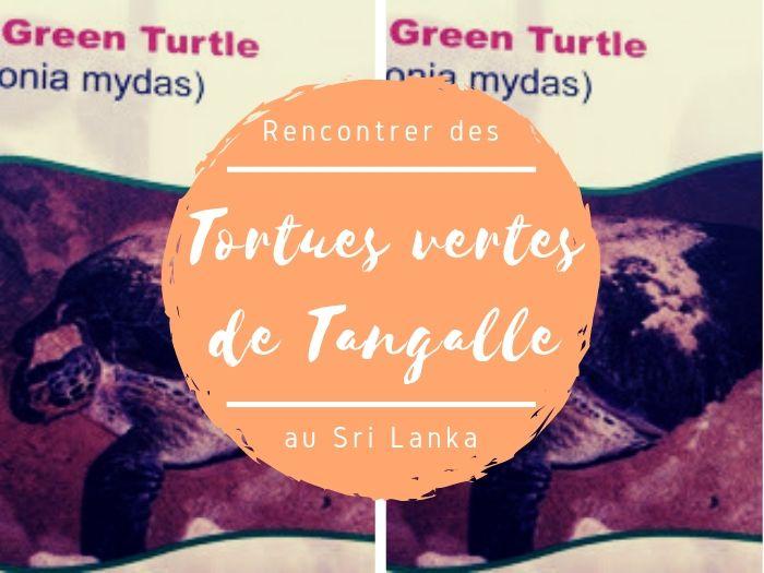 Les tortues vertes de Tangalle au Sri Lanka