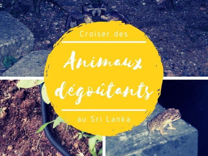 Animaux dégoutants au Sri Lanka