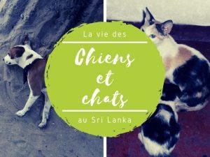 Chiens et chats au Sri Lanka
