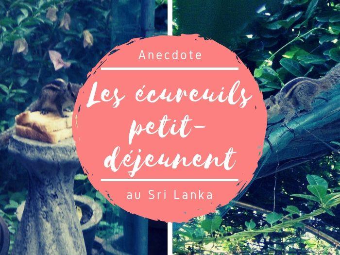 Les écureuils au Sri Lanka