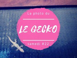 Photo du samedi gecko au Sri Lanka