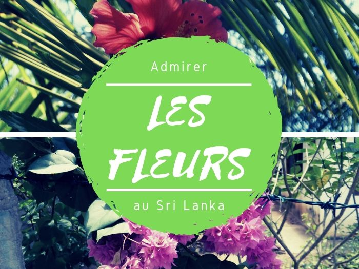 Flower Power au Sri Lanka