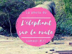 La photo du samedi l'éléphant sur la route au Sri Lanka