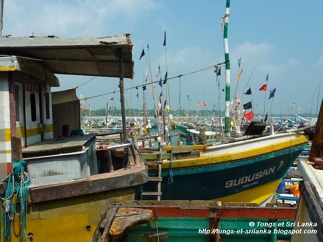 Le charmant quartier des pêcheurs de Tangalle au Sri Lanka