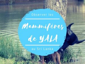 Parc national de Yala mammifères au Sri Lanka
