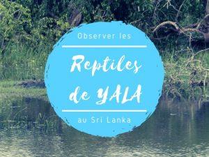 Parc national de Yala reptiles au Sri Lanka