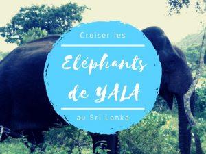 Parc national de Yala éléphants au Sri Lanka