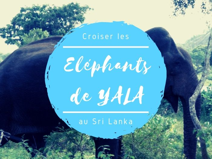 Parc national de Yala éléphants au Sri Lanka