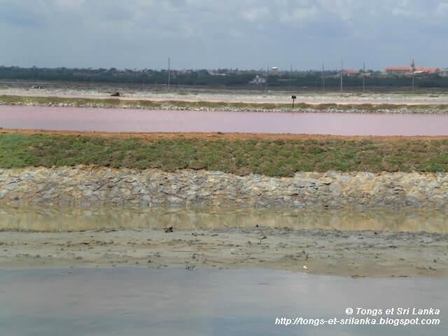 Un samedi, une photo sri lankaise #56
