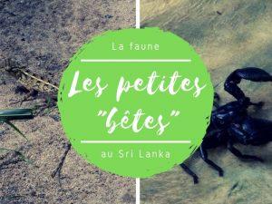Les petites bêtes au Sri Lanka