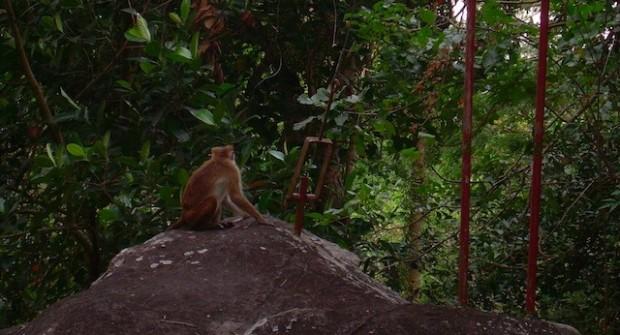 Quelques astuces pour passer de bonnes vacances dans un pays tropical !