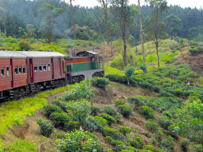 train montagnes plantations de thé