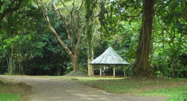 Kandy : Le jardin botanique #2