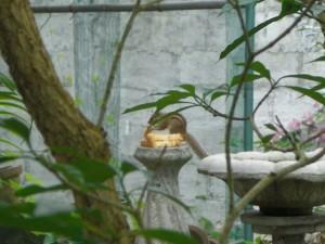 Ecureuil au Sri Lanka