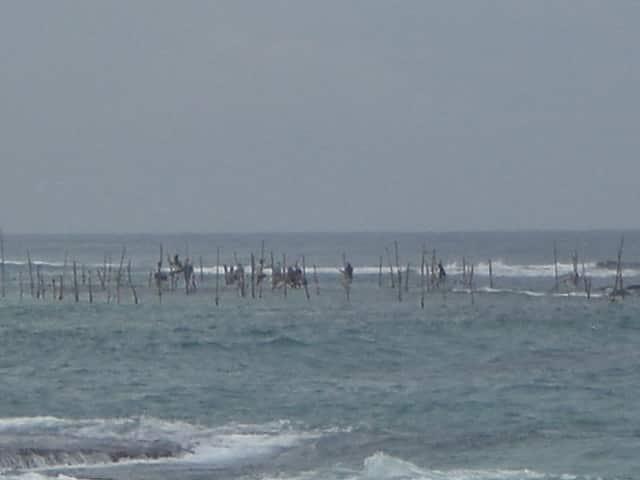 Le pêcheur sachant pêcher est perché au Sri Lanka!