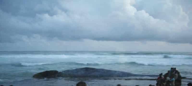 maltraitance baleines a mirissa au sri lanka