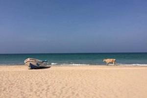 Nilaveli et Uppuveli : les plages de rêve de la côte Est du Sri Lanka