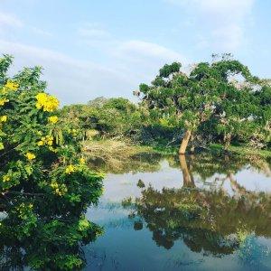 Souvenir des paysages de Yala au Sri Lanka Memory ofhellip