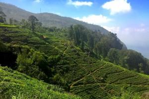 Où s'arrêter quand on visite les montagnes au Sri Lanka ?