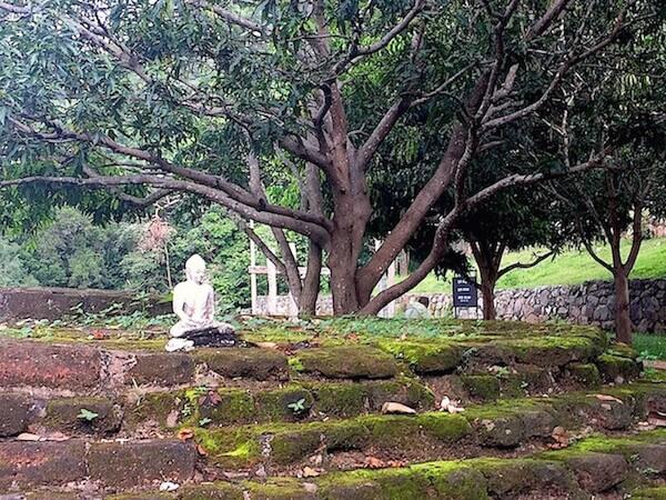 Buddha-sous-mango