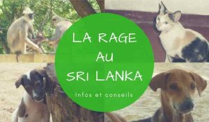 La rage au Sri Lanka