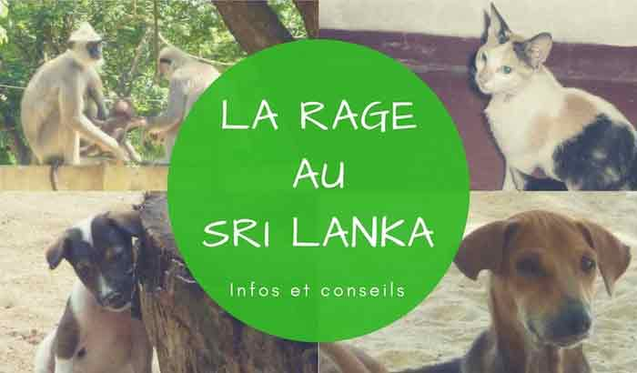 La rage au Sri Lanka : informations, précautions et conseils aux voyageurs