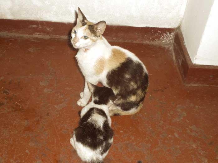 chat-au-sri-lanka