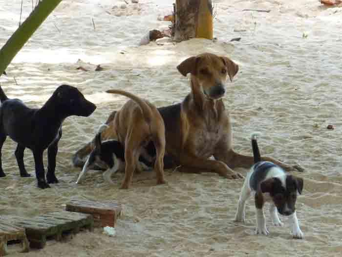 chien-au-sri-lanka