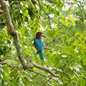 Quand un bel oiseau bleu se laisse gentiment photographier auhellip