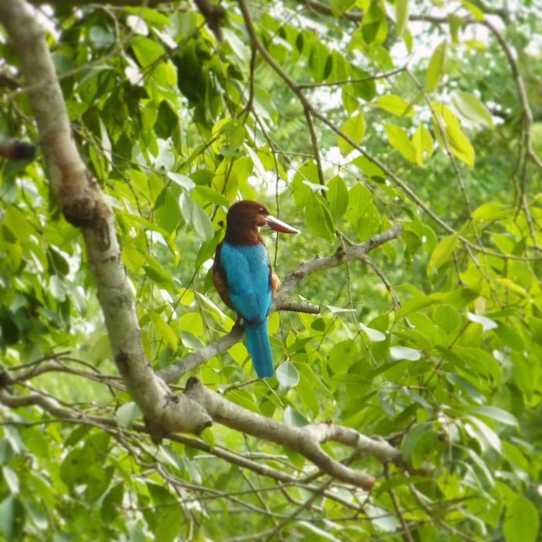 Le parc national de Yala #2 : Cuicui, ces oiseaux qui nous accrochent l'oeil !
