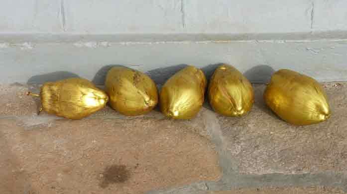 Tongs et Sri Lanka- Stage au Sri-Lanka - noix de coco dorées