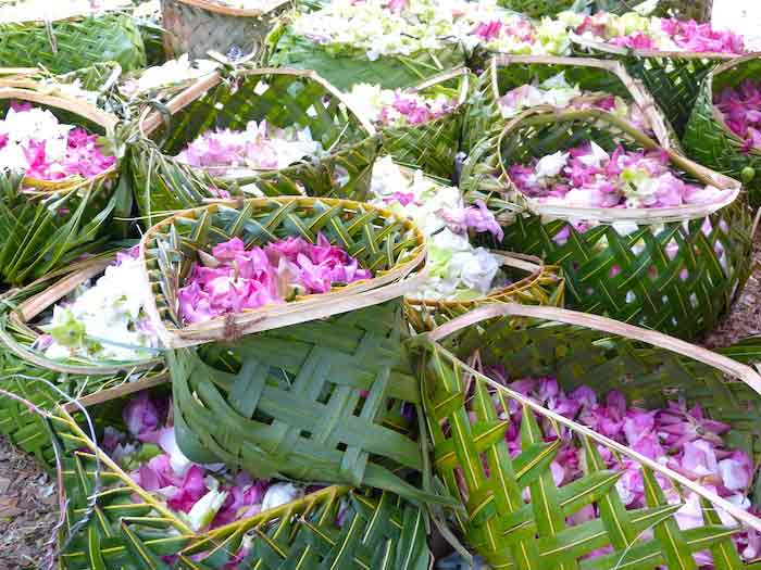 Tongs et Sri Lanka- Stage au Sri-Lanka - offrandes de lotus
