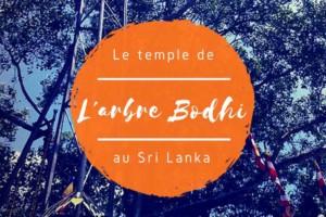 Anuradhapura : l'arbre Bodhi au Sri Lanka ou la vie locale bouddhiste