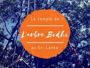 L'arbre Bodhi à Anuradhapura au Sri Lanka