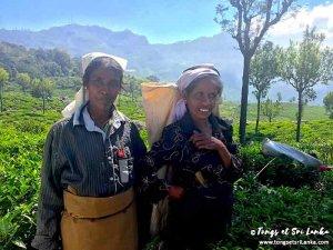 Cueilleuses de thé - plantations de thé au sri lanka - tongs et sri lanka