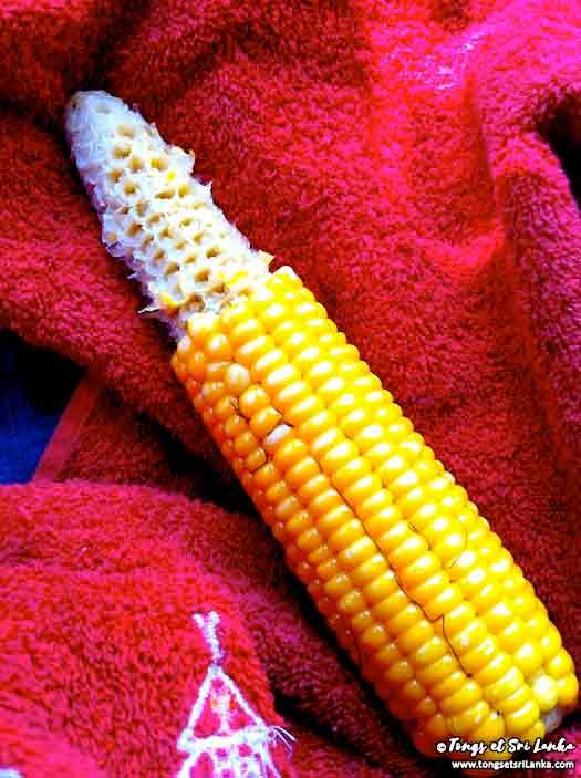 épi de maïs à grignoter au sri lanka