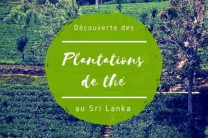 Plantations de thé au Sri Lanka : visite d'une usine et la vie des cueilleuses
