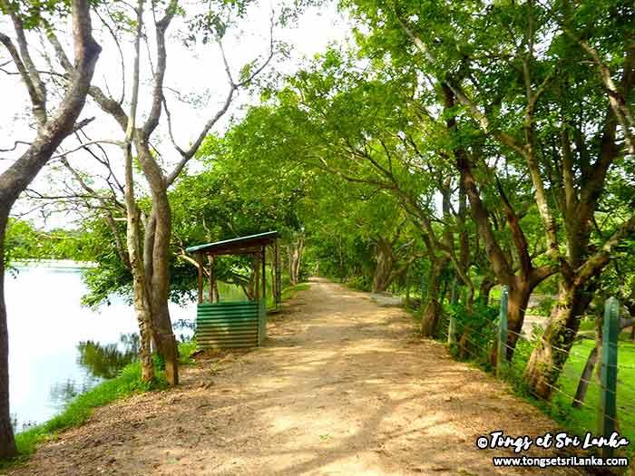 chemin des ruines du nord au Sri Lanka