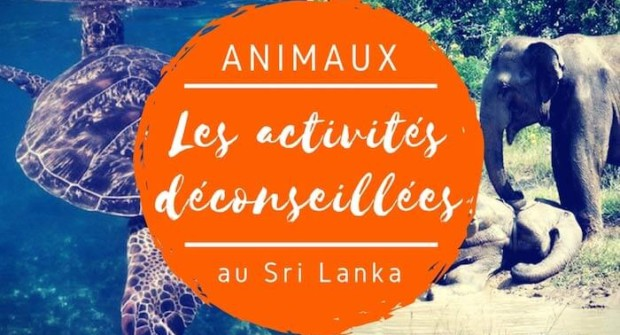 Eléphants, tortues, baleines : les activités touristiques déconseillées au Sri Lanka (et les alternatives)