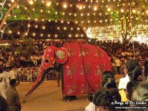 éléphant pendant la perahera de kataragama au sri lanka