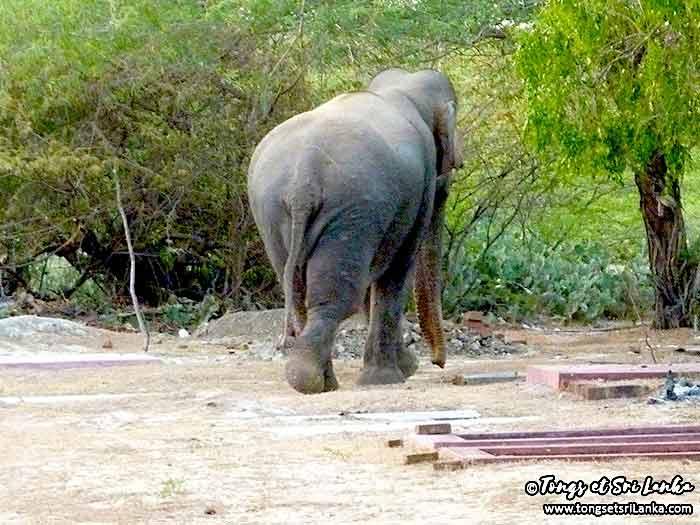 Un samedi, une photo sri lankaise #31