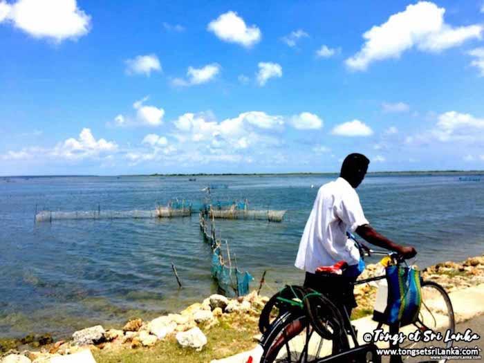 La péninsule Nord de Jaffna au Sri Lanka