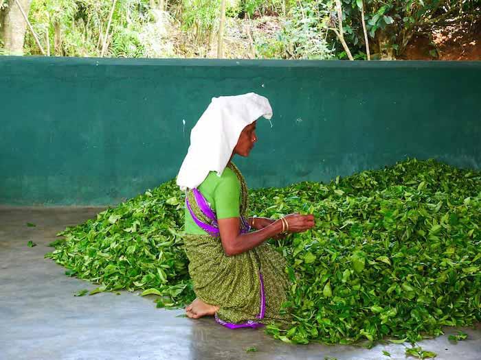 voyage-sri-lanka-ella-plantation-de-the-teapicker-femme