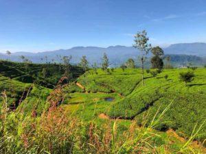 voyage-sri-lanka-plantation-de-the-ella-kandy-train-sejour-vacances
