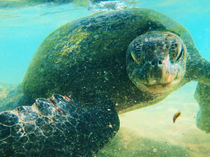 voyage-sri-lanka-tortue-de-mer-hikkaduwa-plage