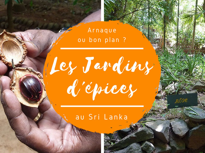 jardin d'épices au Sri Lanka