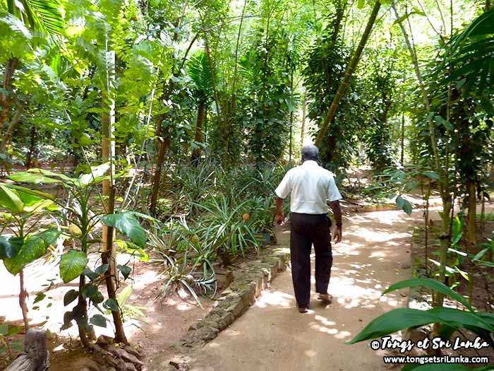 arnaque-dans-les-jardins-d'épices-au-sri-lanka