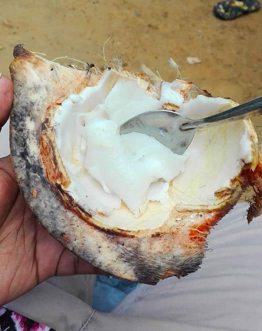 noix de coco au sri lanka