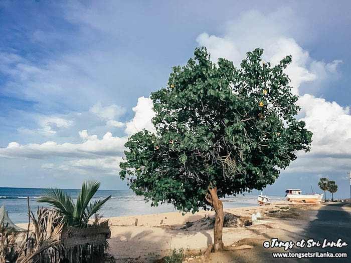le-phare-de-Kankesanthurai-vers-jaffna-au-sri-lanka